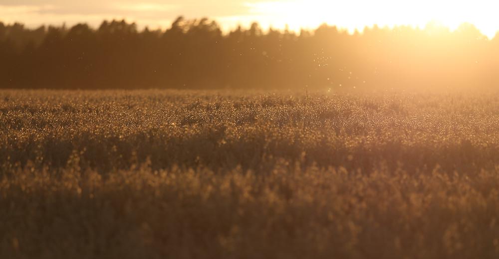 Åker i solnedgang - tatt av min kollega Lars.