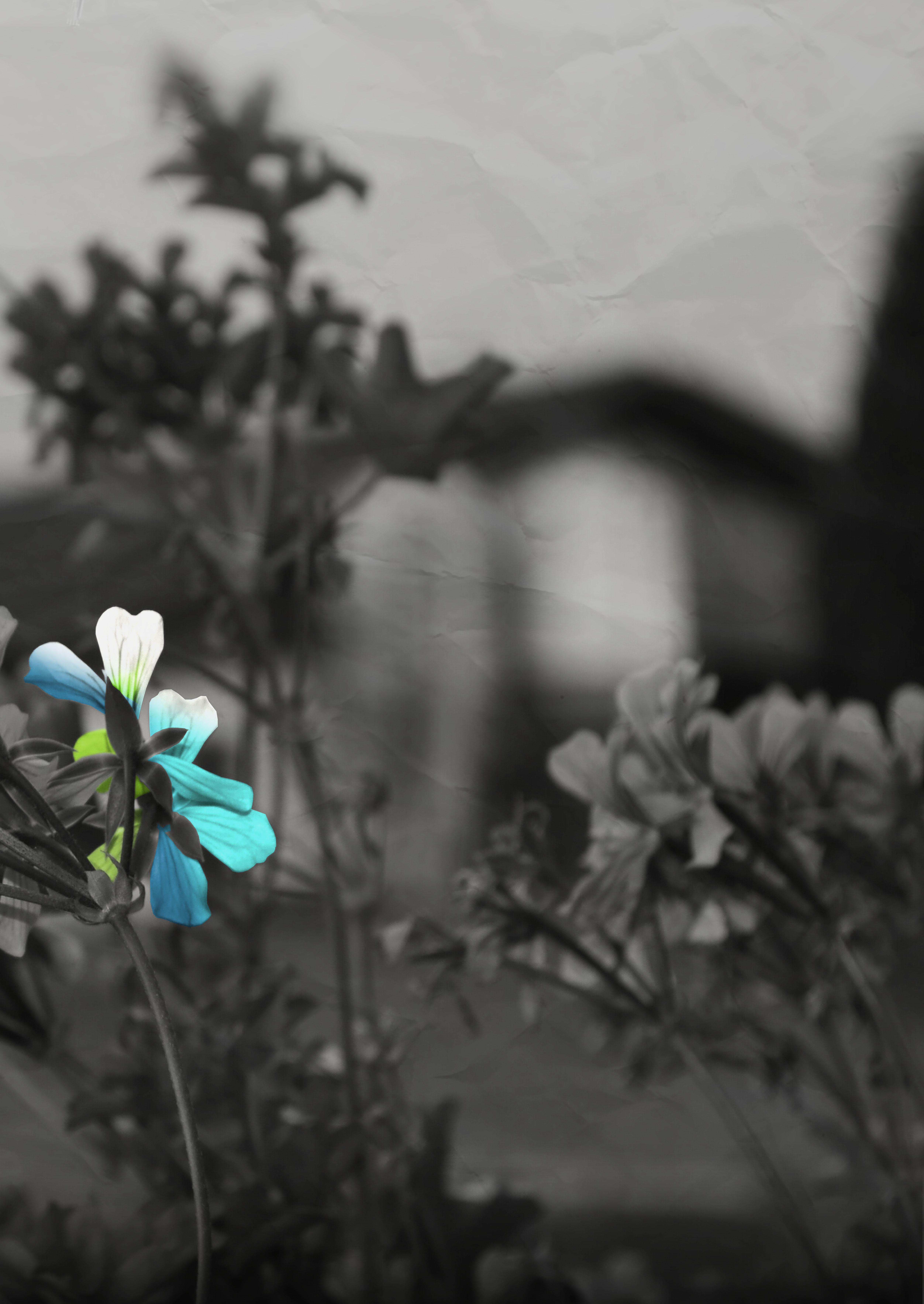 PLAKAT A2 Hochkant Blume