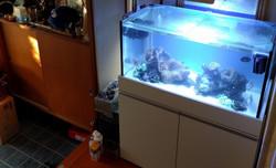 90cm海水魚