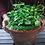 Thumbnail: Ayurvedic Herbs