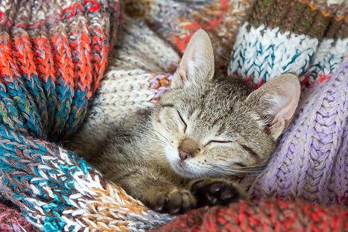 cat-4332992_1920.jpg