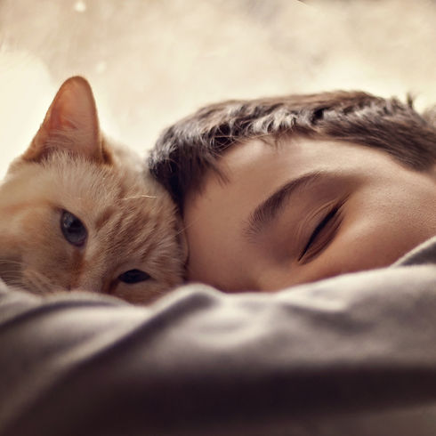 cat-4362614_1920.jpg