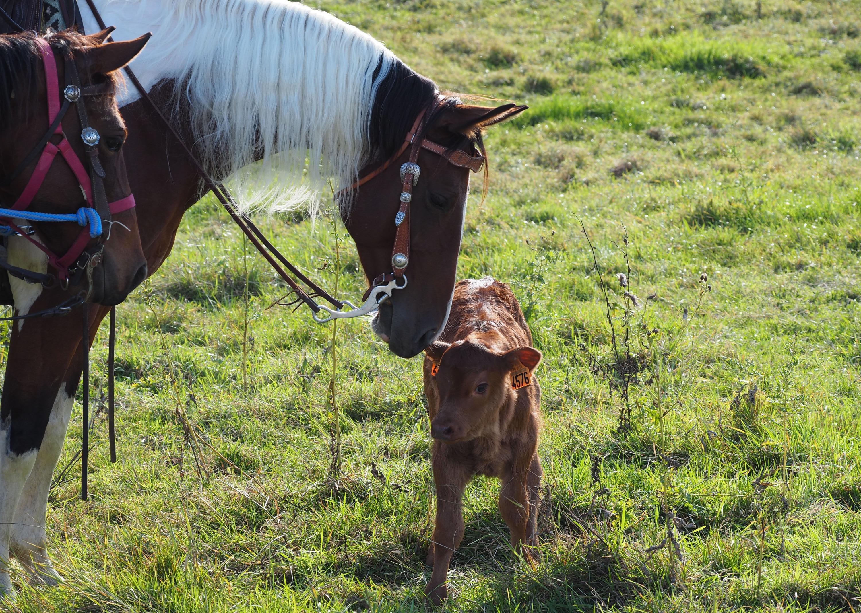 working-ranch-jura-bea-asper