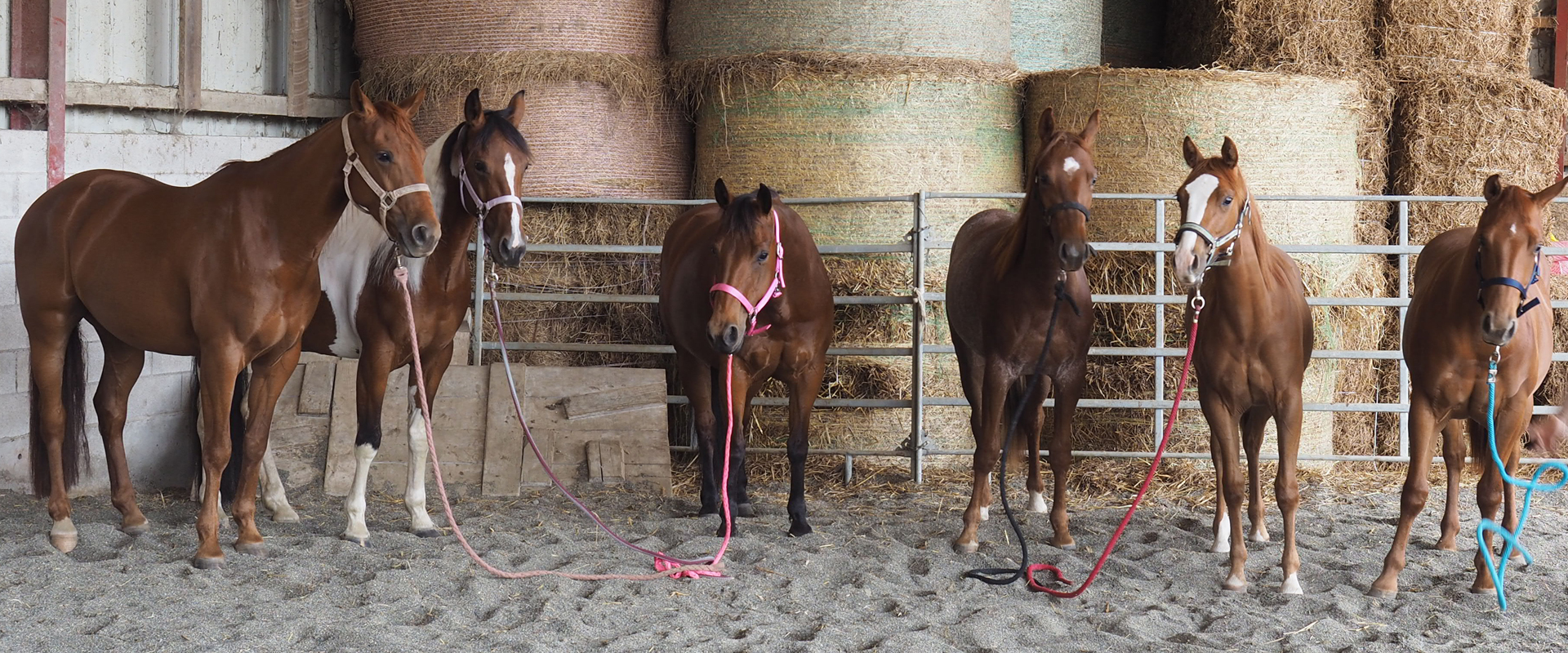 western-reiten-jura-pferdezucht-bea-asper