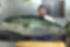 SnapCrab_NoName_2020-1-22_15-10-32_No-00