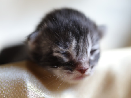 Kitten List