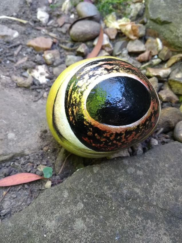 Frogs Eye