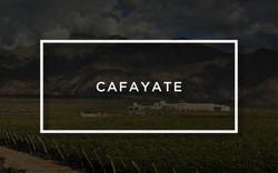 Piattelli Vineyards Cafayate
