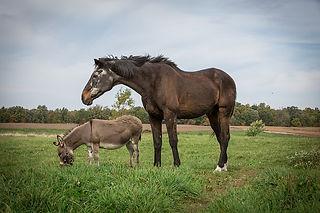 סוס וחמור .jpg