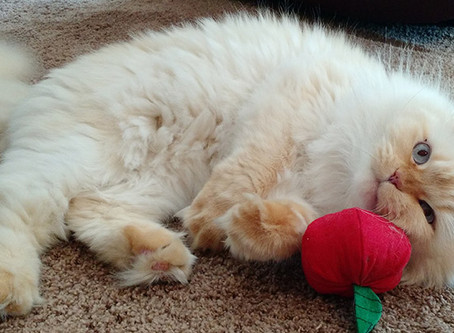 Why We Require Daily Pet Sitting Visits For Cats – a Paskapoo Confession