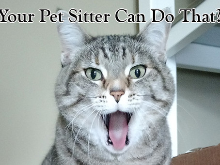 Your Professional Pet Sitter can do that?!