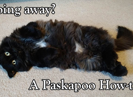 Preparing for Your Professional Pet Sitter Before Leaving On Your Vacation - A Paskapoo How-To