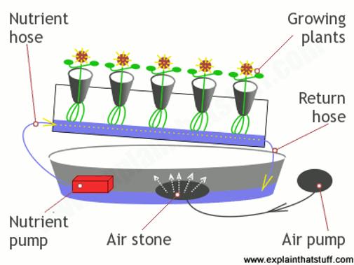 hydroponics-nutrient-film-technique.png