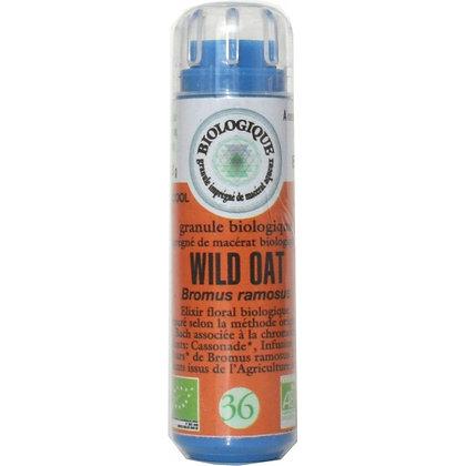 Wild oat N°36 Granules