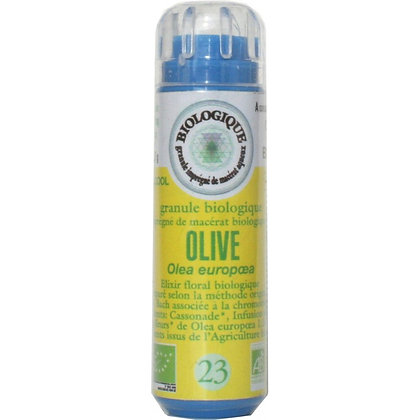 Olive N°23 Granules