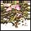 Thumbnail: Thé Blanc à la Rose