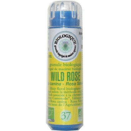 Wild rose N°37 Granules