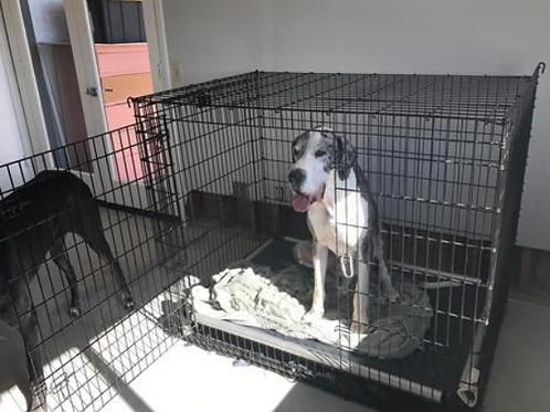Hondenbench solution series van Mid West