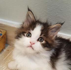 kitten we bred