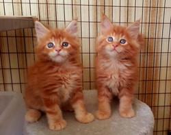kittens we bred