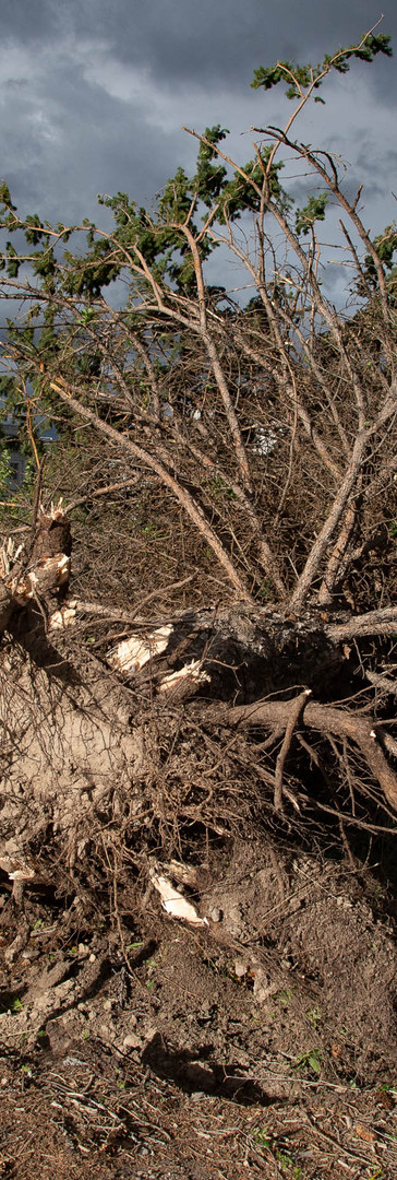 44,000 remain without power after Utah windstorm