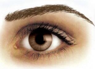 Eyebrow Tattoos Light Brown High Arch