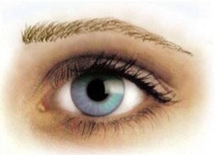 Eyebrow Tattoos Grey Medium Arch