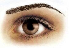 Eyebrow Tattoos Brown High Arch
