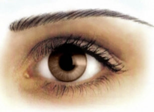 Eyebrow Tattoos Brown Medium Arch