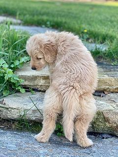 Puppy steps.jpg