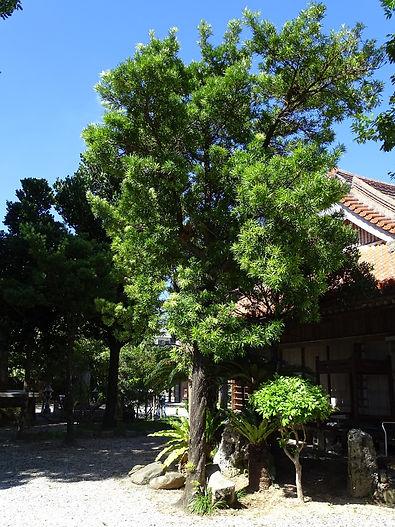 樹形(トップ)2.jpg