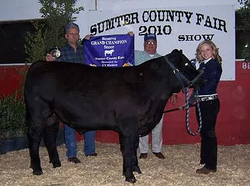 2010 sumter county