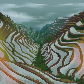 ricefield copy.png