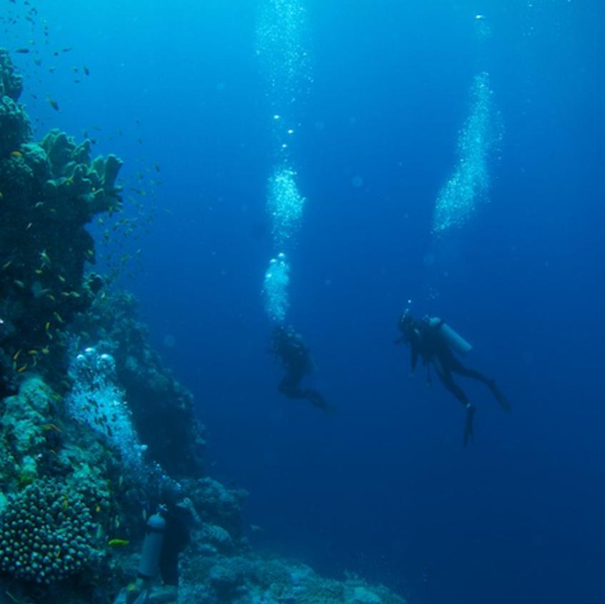 The Wall, Astove Island, Aldabra Group-2