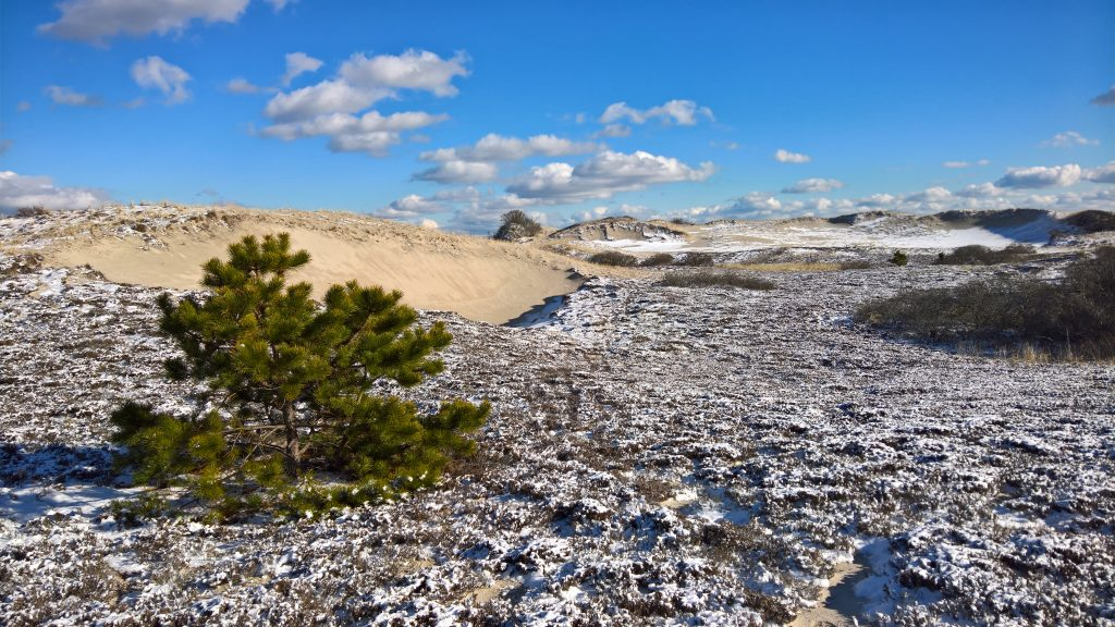 A beautiful hike after new snow.- Sandy Neck, Barnstable, Cape Cod( January 2016)