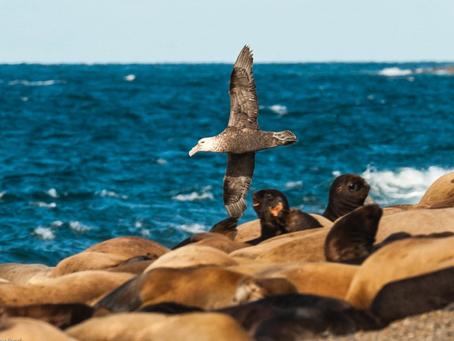 Wild Patagonia: Peninsula Valdez