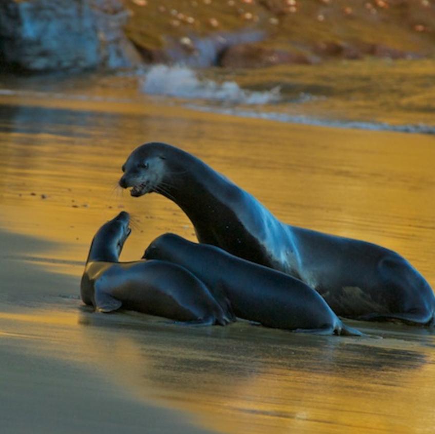 Sea lion family values