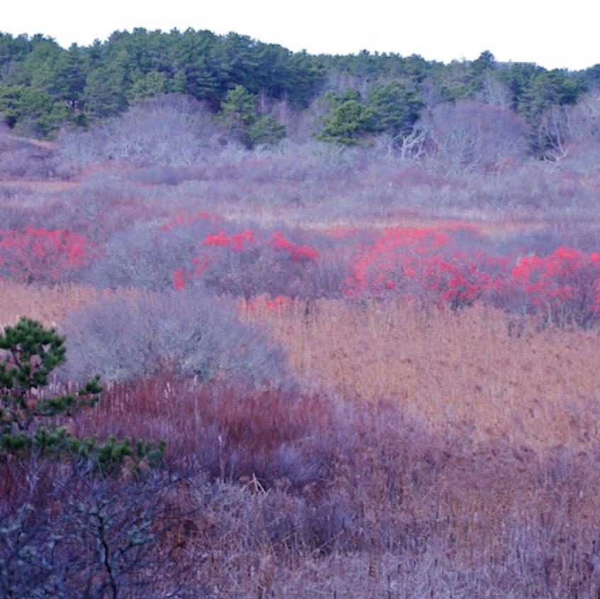 Marshlands & Winterberry, Bound Brook Island