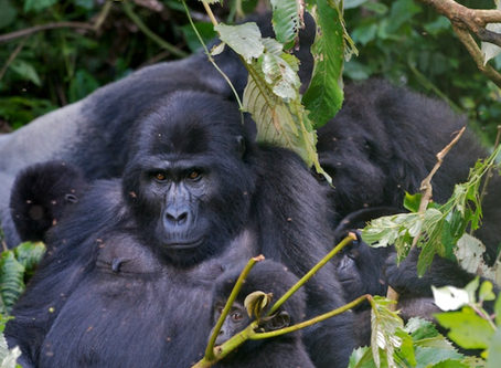 African Wildlife Foundation: The Front Lines of Conservation