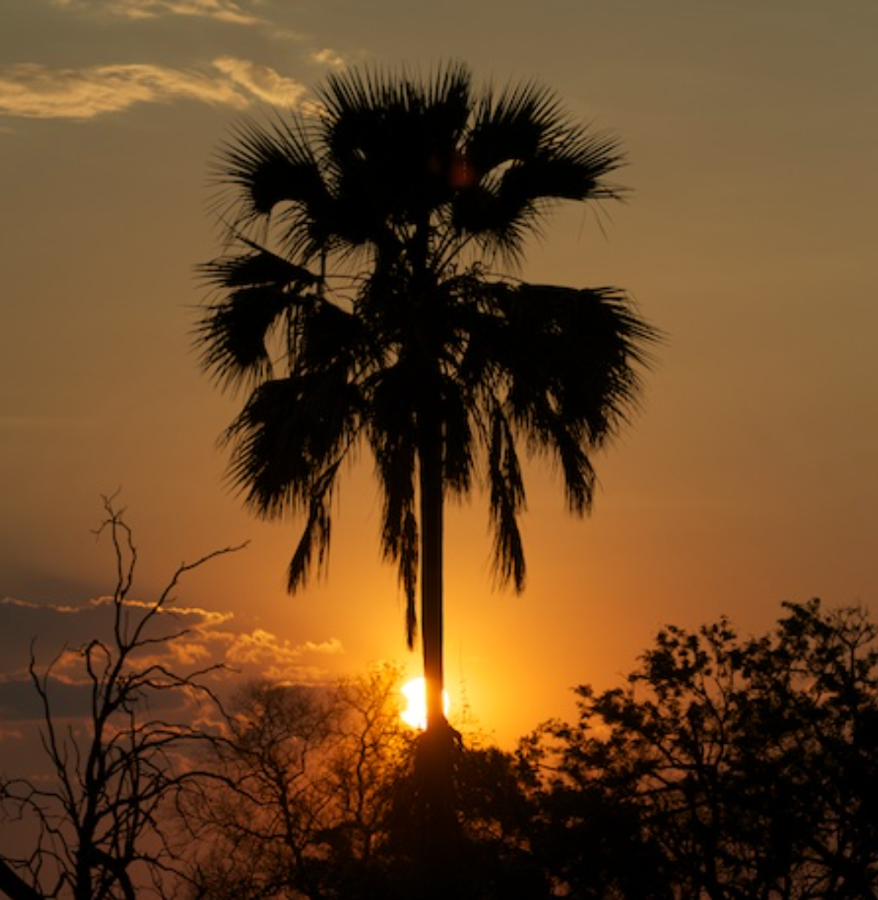Sundown near Selinda Camp