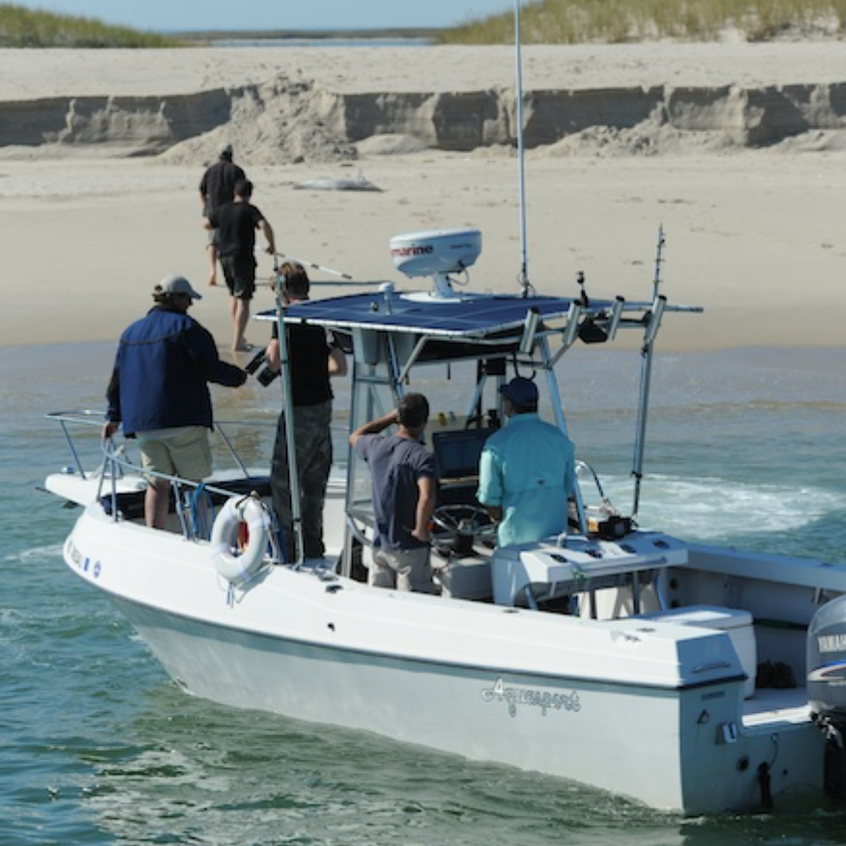 White Shark Research with Film Crew