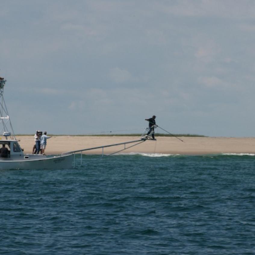 Tracking a white shark