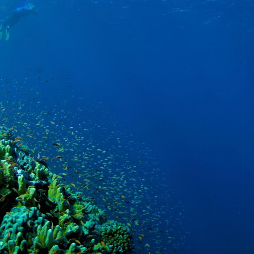 The Wall, Astove Island, Aldabra Group