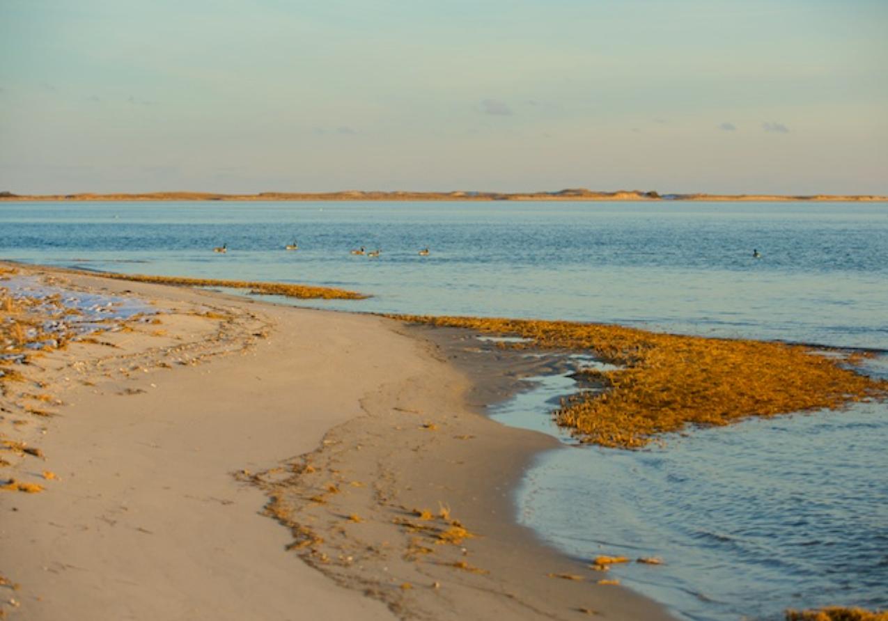Morris Island, Monomoy National Wildlife Refuge, Chatham