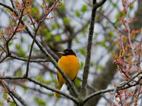 Signs of Spring on Cape Cod #4