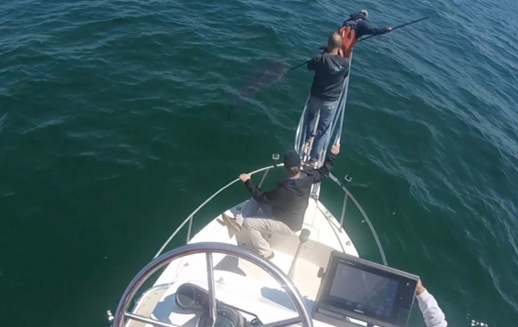 Greg tags the season's first white shark with the team from ABC Nightline on board.