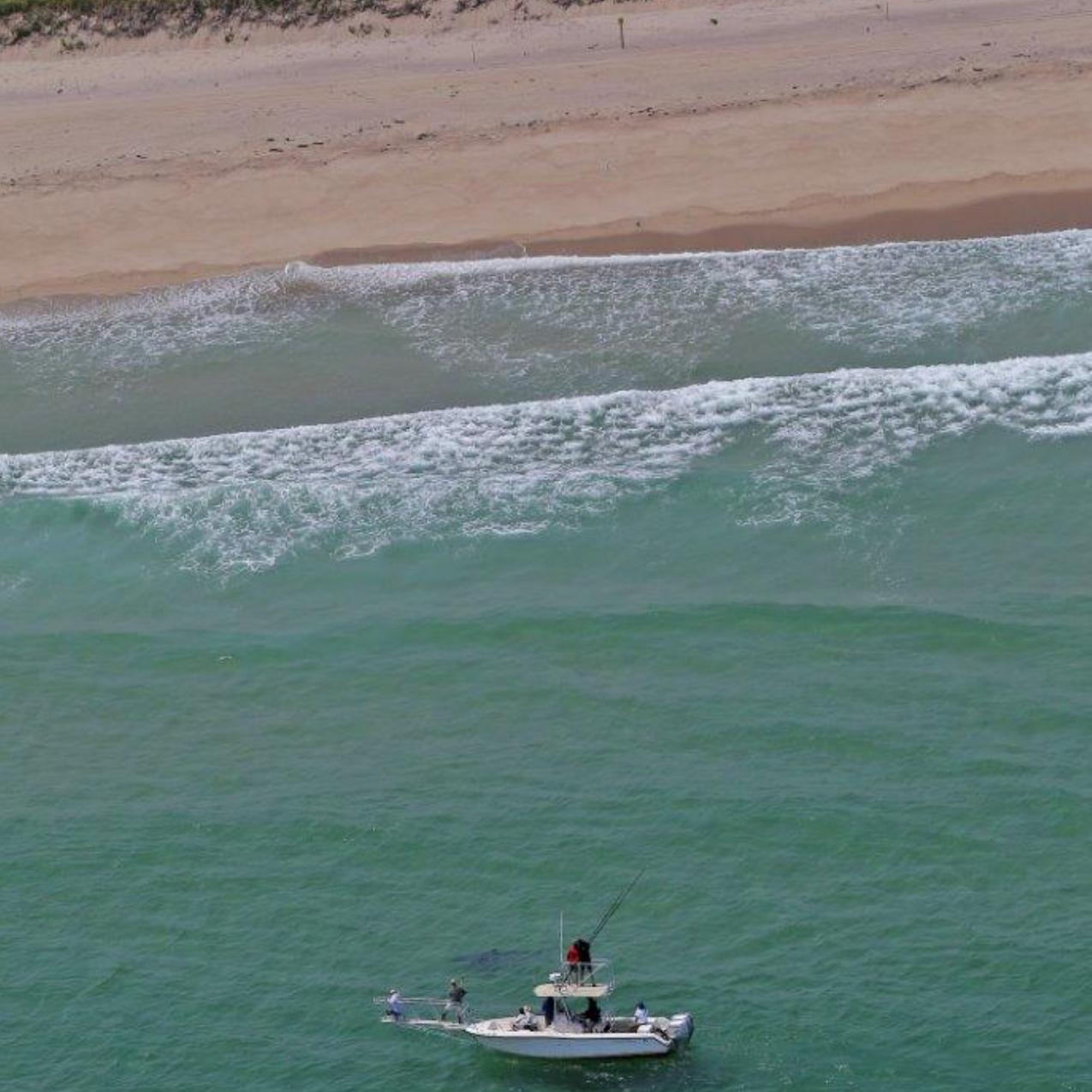 Photo courtesy Wayne Davis working a white shark off Nauset Beach, Orleans, Massachusetts