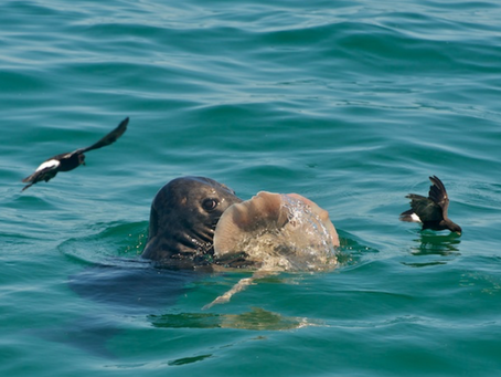 Close Encounters of the Seal Kind