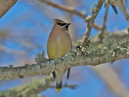 Wild Cape Cod Notebook: Signs of Spring