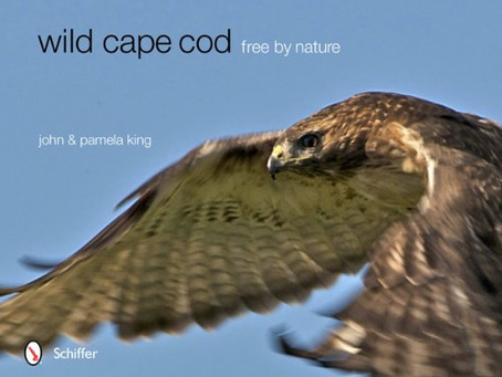Wild Cape Cod, Free by Nature – First Edition